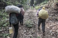 A group of peasants walking through the jungle with provisions. Covendo. La Paz Department. Bolivia