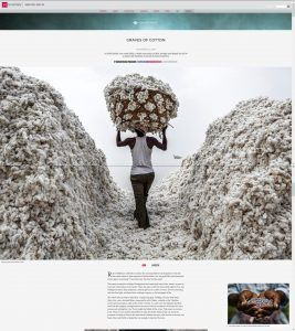 Narratively. Graves of Cotton